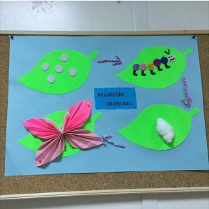 life of cycle animals craft idea