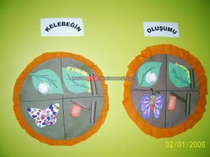 life of cycle butterfly craft idea (4)