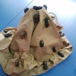 peanut shell ant bulletin board idea