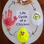 life of cycle chicken craft idea