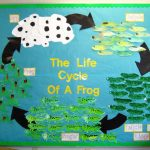 life of cycle frog craft