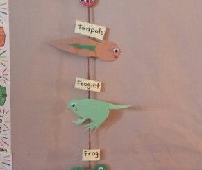 life of cycle frog craft ideas