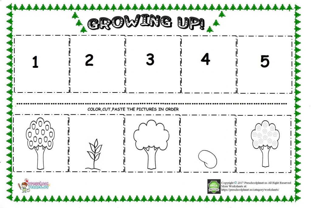 apple tree life cycle sequencing sheets