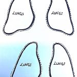 lungs template