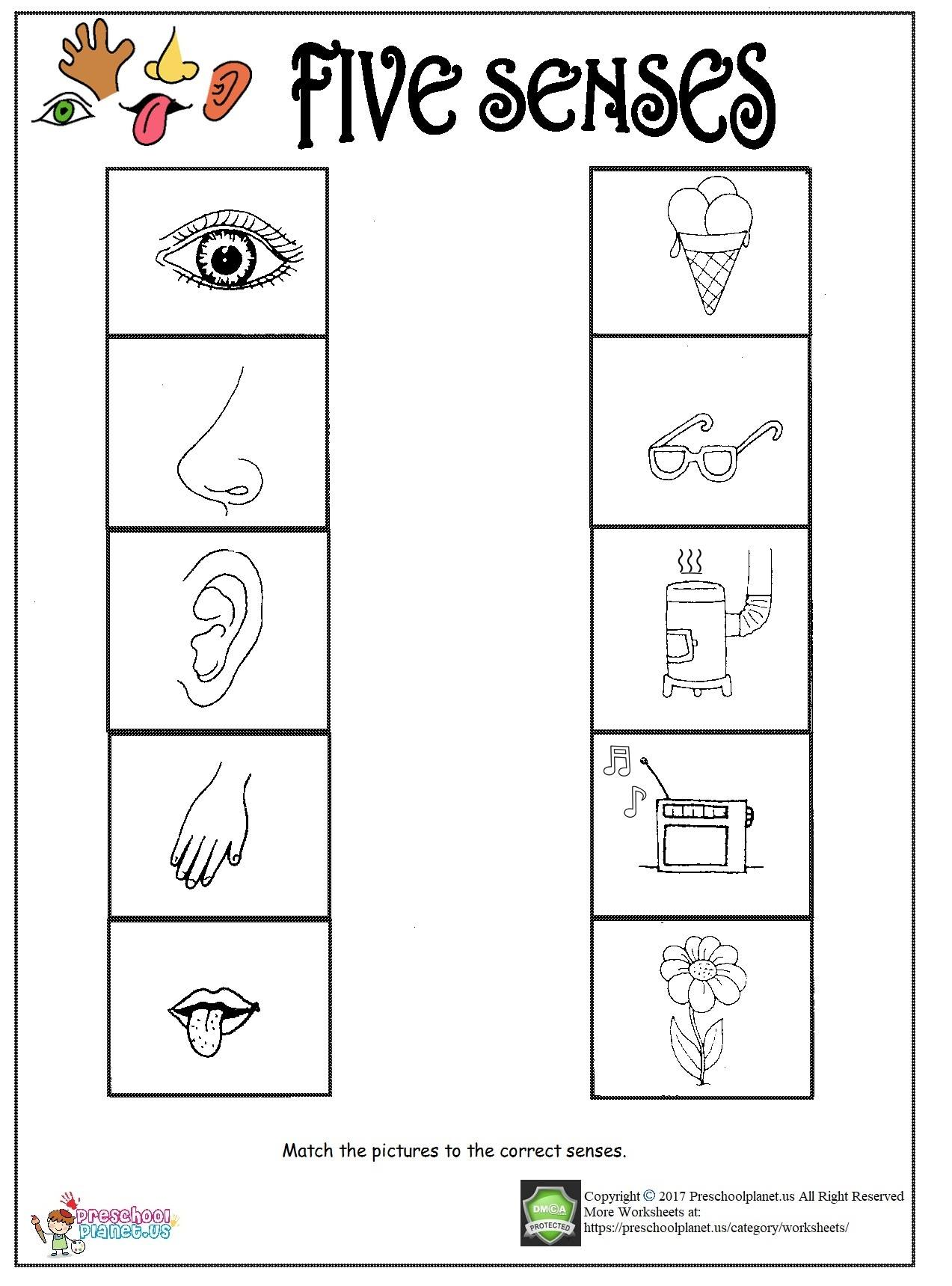 worksheet Worksheet Five Senses printable five senses worksheet
