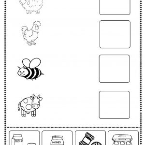 animal products worksheet