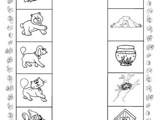 animal worksheet for kids