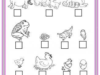 life of cycle animals worksheet
