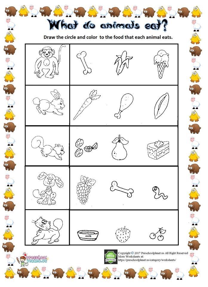 what animal eat worksheet