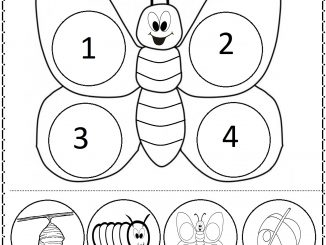 life of cycle butterfly worksheet