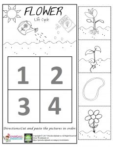 Flower Life Cycle Worksheet