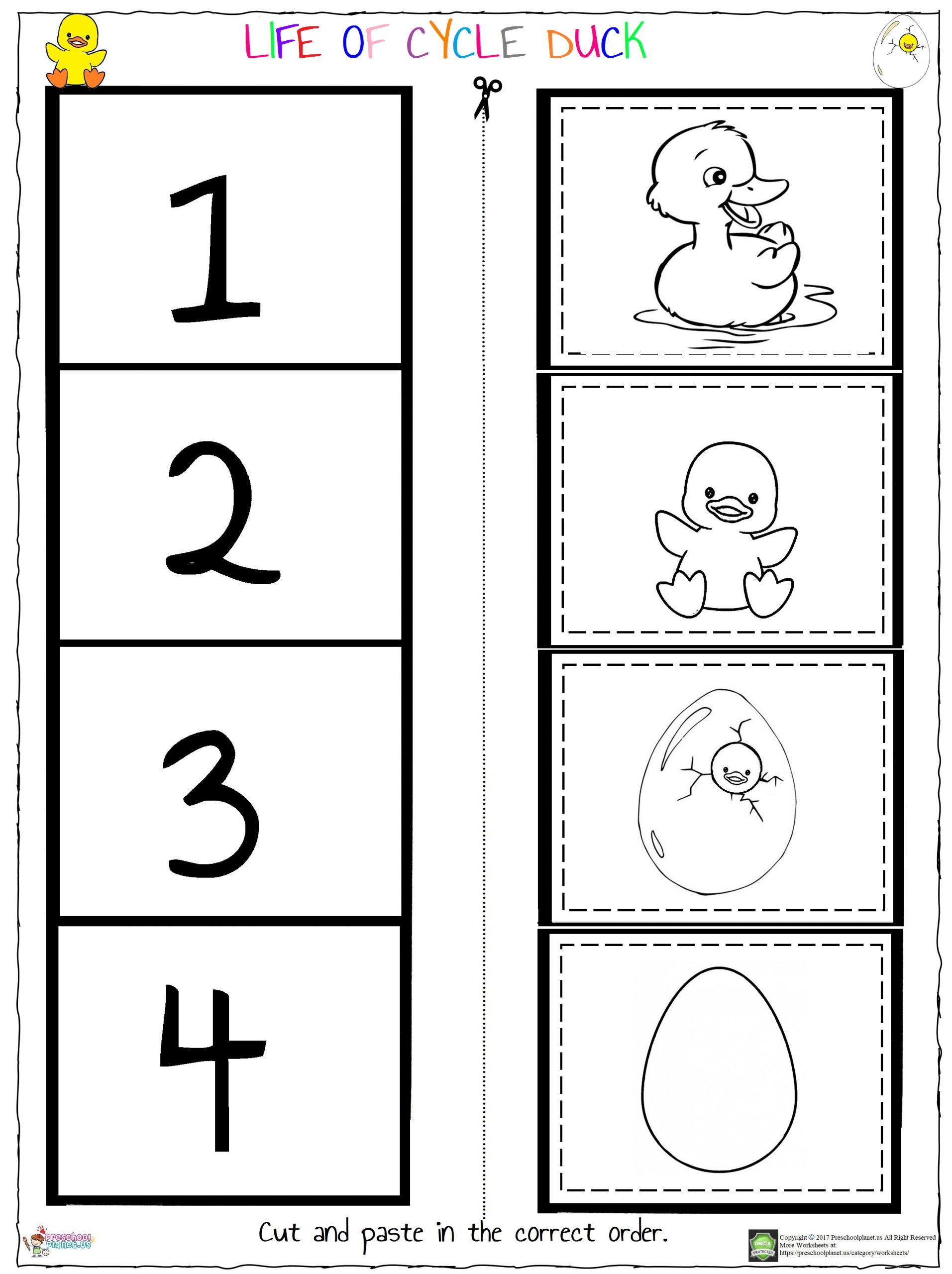 Life of Cycle Duck Worksheet